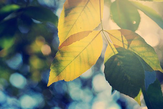 「季節の変わり目」の画像検索結果